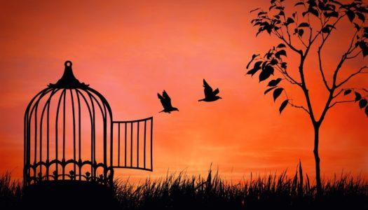 Szabadságból szabadságba
